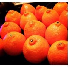 Аромат Марокканский мандарин 500мл